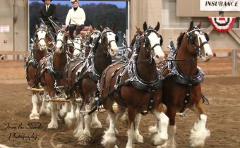 HITCH_2015_8_horse_hitch_clydes